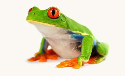 Tail Of The Dragon Photos >> Buy Amphibians In Winchester | Frogs & Salander For Sale